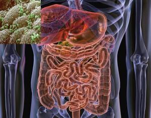 intestinele