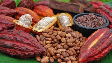 Boabele de cacao, un inlocuitor sanatos pentru ciocolata din magazine