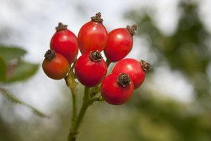 Lipsa acestei vitamine poate duce la sangerari ale gingiilor