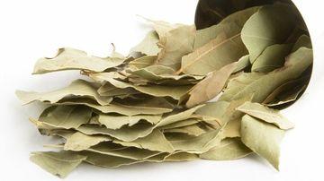 Dafinul, o planta nobila cu proprietati benefice pentru sanatate