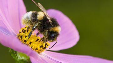 Albinele, protectoarele umanitatii si gardienii planetei