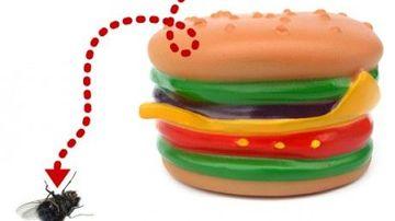 De ce nu se descompun hamburgerii de la McDonald's ?