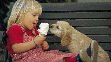Compasiunea fata de animale si pacea mondiala