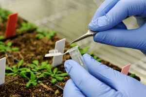 Stiinta valideaza proprietatile vindecatoare ale plantelor
