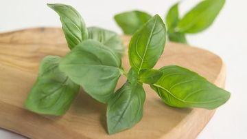 10 ierburi aromatice si condimente de nelipsit in bucatarie