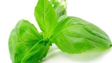 20 de plante vindecatoare pe care le puteti cultiva acasa