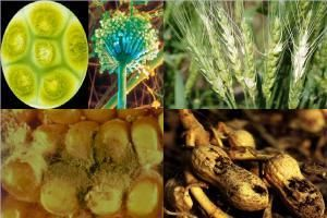 Micotoxinele : pericolul hormonal din mancarea noastra