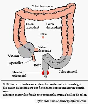 stat pe vine colon