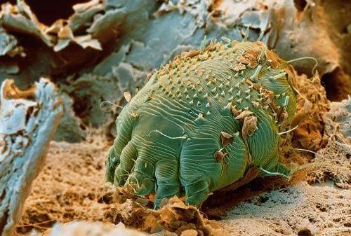 parazit al organismului gazdă