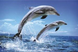 Delfini alimentatie