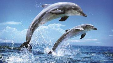 Ce putem invata de la delfini despre o alimentatie de calitate