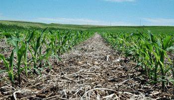 Hranirea solului: o introducere la metoda de gradinarit fara lucrarea in profunzime a solului (no-tilling)