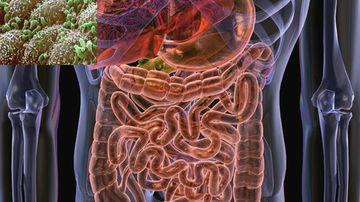 Importanta unui sistem digestiv sanatos pentru o imunitate sporita
