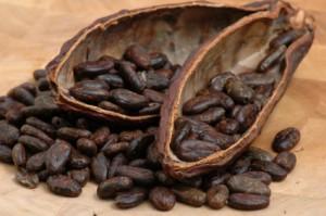 alimente cacao