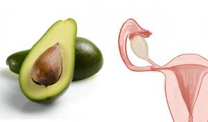avocado uter