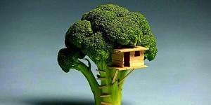 Broccoli copiii