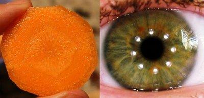 morcovi ochi corp