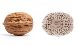 nuca creier