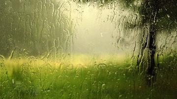 Ploaia naste...