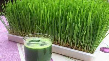 50 de motive pentru a bea in fiecare zi suc din iarba de grau