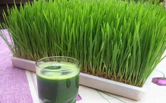 tratamentul articulațiilor cu iarbă de grâu)