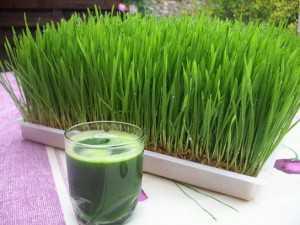 suc de iarba de grau