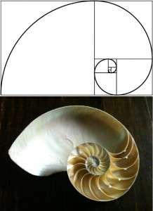 Scoica Fibonacci
