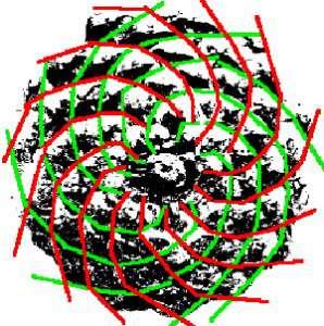 Con de brad Fibonacci