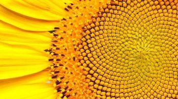 15 exemple stranii din natura ale Proportiei de Aur