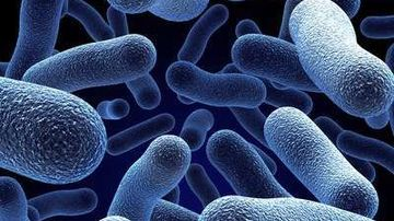 Cunoaste-ti microbii