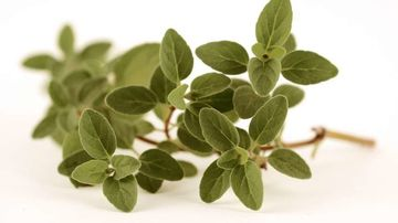 Oregano - 5 beneficii pentru sanatate