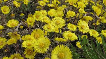 12 plante si ierburi care vindeca si mentin sanatatea plamanilor