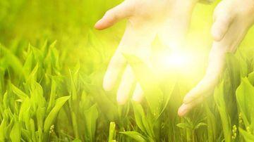 Cum sa scapi de oboseala cu ajutorul plantelor