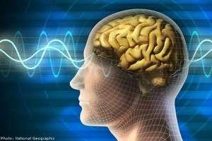 memoria creierului