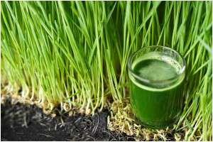 vitamina a suc de iarba de grau