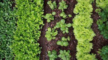 Verde pentru viata - oda pentru smoothie-urile verzi
