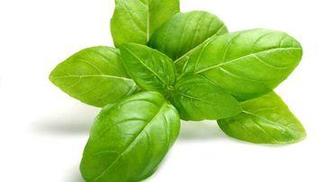 Busuiocul: planta aromatica subtila cu puternice beneficii de sanatate