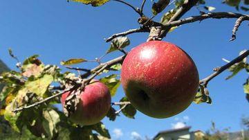 20 de lucruri interesante despre mere
