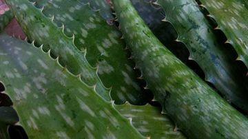 15 proprietati vindecatoare ale plantelor