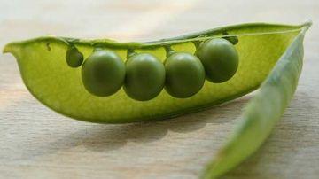 Mazarea, o sursa importanta de proteina biodisponibila