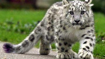 Jumatate din animalele planetei au disparut in ultimii 40 de ani