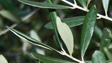 Ierburi aromatice, vitamine si minerale antivirale