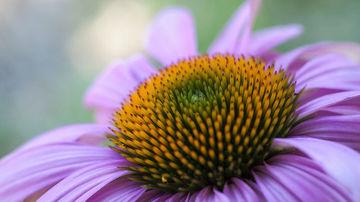 Intareste-ti sistemul imunitar cu aceste remedii naturale