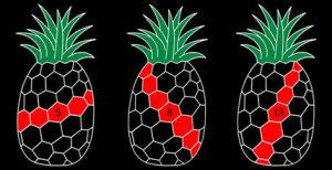 ananas geometrie