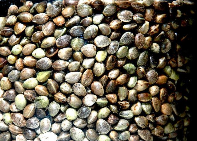 colesterolul seminte de canepa