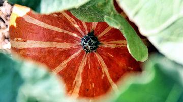 Plantele pot avea carente nutritive precum oamenii