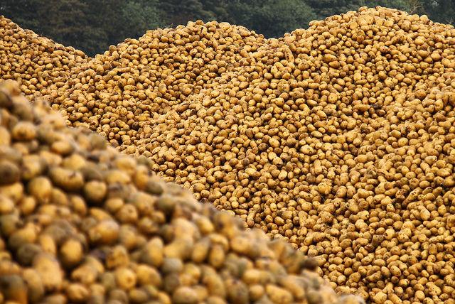 boli autoimune cartofi
