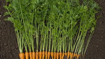 8 motive pentru care ar fi bine sa incepi sa consumi frunzele de morcovi