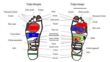 Principalele zone reflexogene in masajul terapeutic