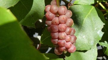 Remedii decongestive pe baza de plante pentru probleme respiratorii